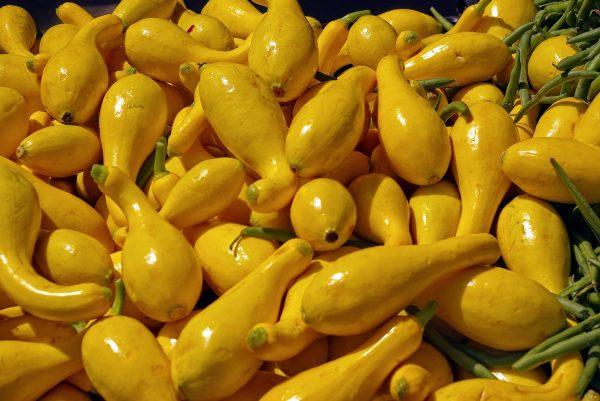 yellow squash, yellow, crookneck