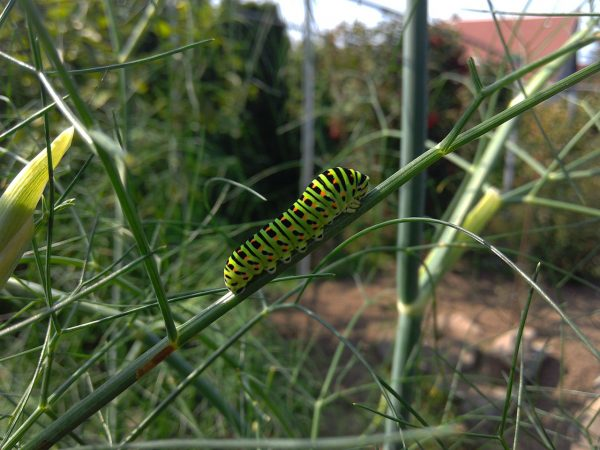 nature, caterpillar, insect