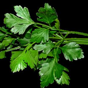parsley, leaves, cooking